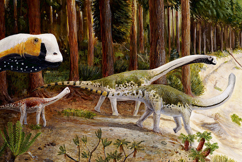 A herd of Europasaurus - the animals lived around 154 million years ago.